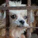SIGN: Ban Killing Dogs and Cats for Meat in the US