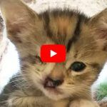 VIDEO: Tiniest Kitten Gets Extra Love from Two Moms