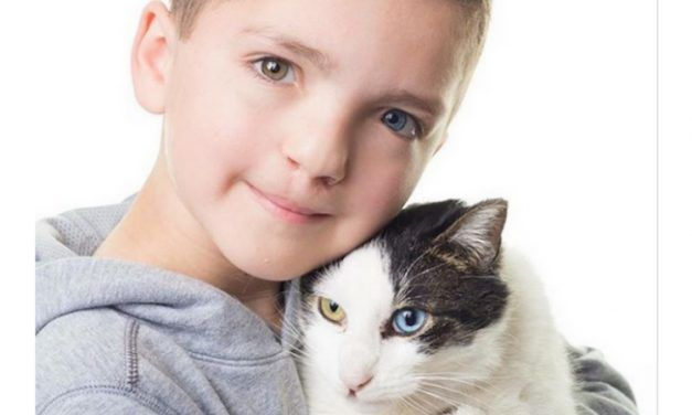 Bullied Boy with Two Different Eye Colors Finds the Perfect Kitten Companion