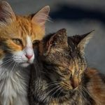 Iowa City Ends Police Shooting of Cats, Seeks More Humane Solution
