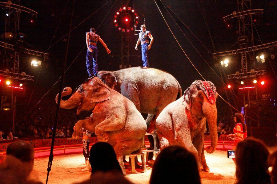 elephants performing circus