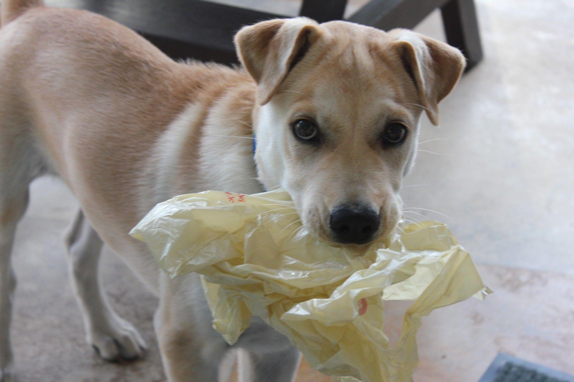 dog with food bag