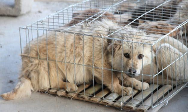 SIGN: Stop the Horrific Yulin Dog Meat Festival and End China's Dog and Cat Meat Trade