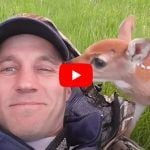 Video: Man Rescues Injured Baby Deer, Nurses Her to Health and Reunites Her with Mama