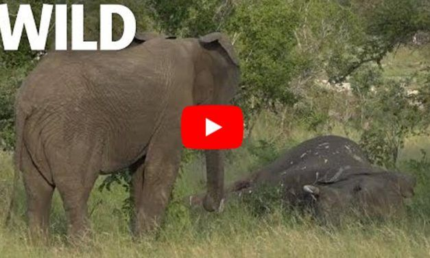 New Footage Shows that Elephants Mourn for Their Dead, Just Like Us