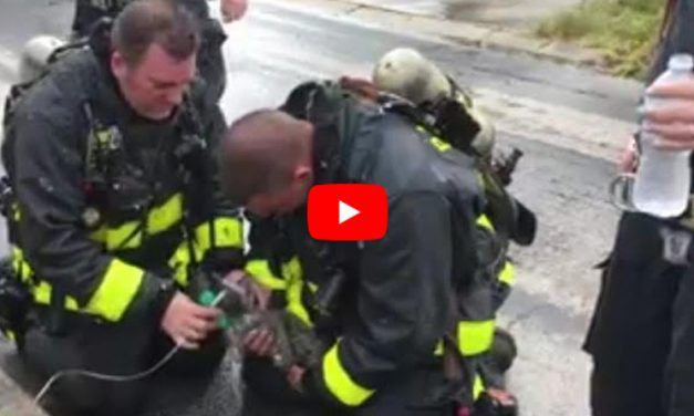 VIDEO: Firefighters Use Tiny Oxygen Mask to Revive Kitten Saved from Fire