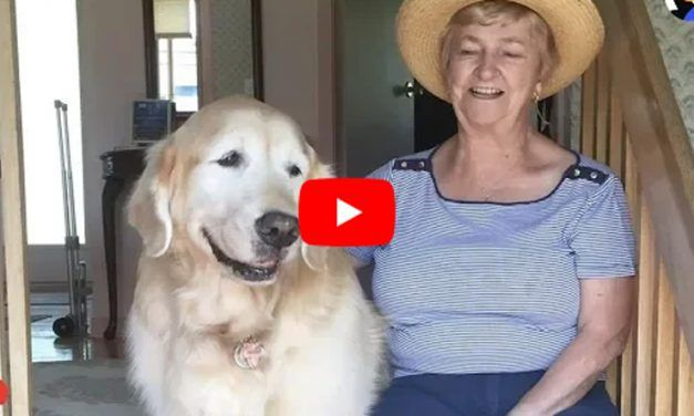 Senior Dog Visits His Favorite Neighbor Every Day