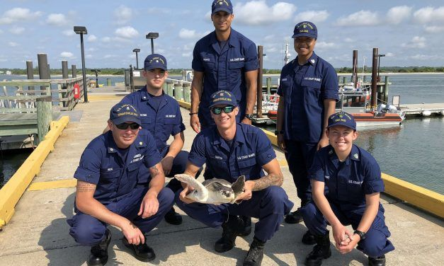 Coast Guard Rescues Injured Sea Turtle Found with Hook Through Mouth