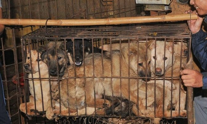 SIGN: Stop the Yulin Dog Meat Festival in 2020