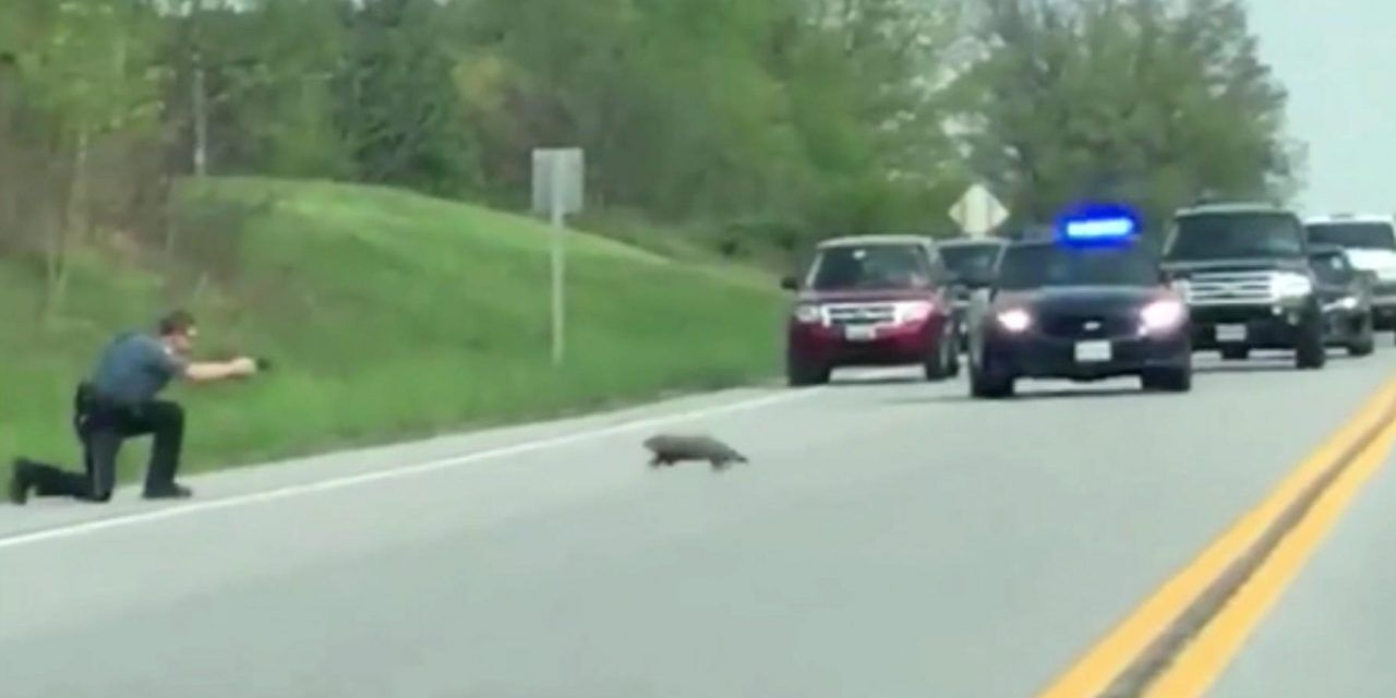 SIGN: Justice for Groundhog Shot and Killed by Officer for Crossing the Street