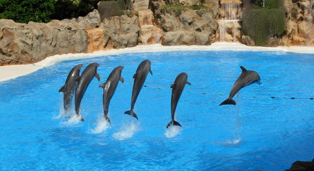 captive dolphins