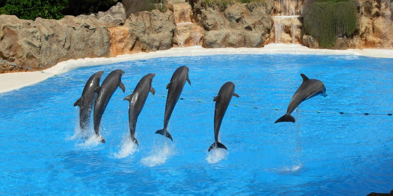 Mexico City Has Just Banned Cruel Dolphin Captivity