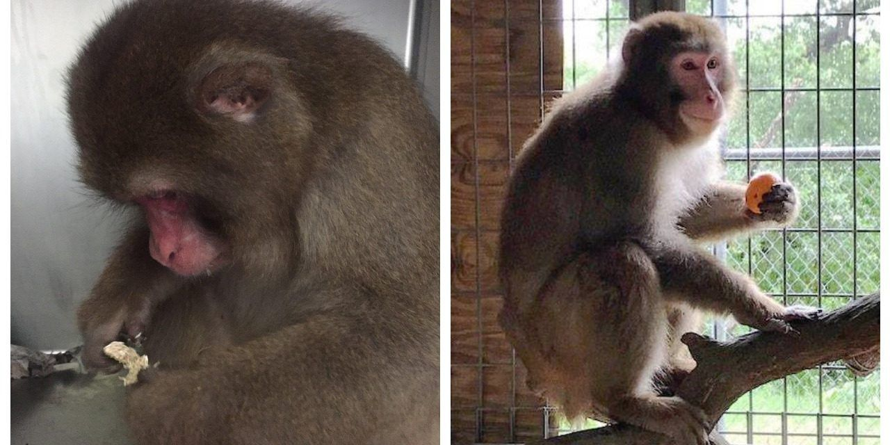 Community Bands Together to Save Captive Monkey from Death Sentence