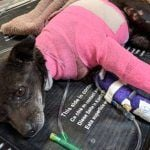 SIGN: Justice for Dog Douses in Gasoline and Set on Fire
