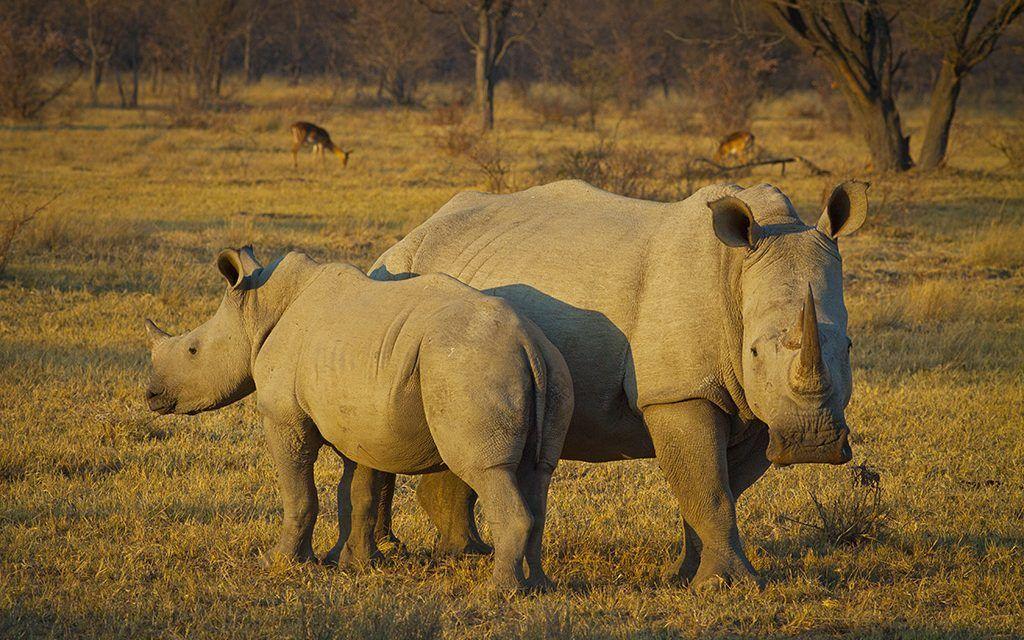 Poachers in Kenya May Soon Face the Death Penalty