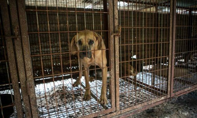 New Bill Could End Dog Meat Farms for Good in S. Korea