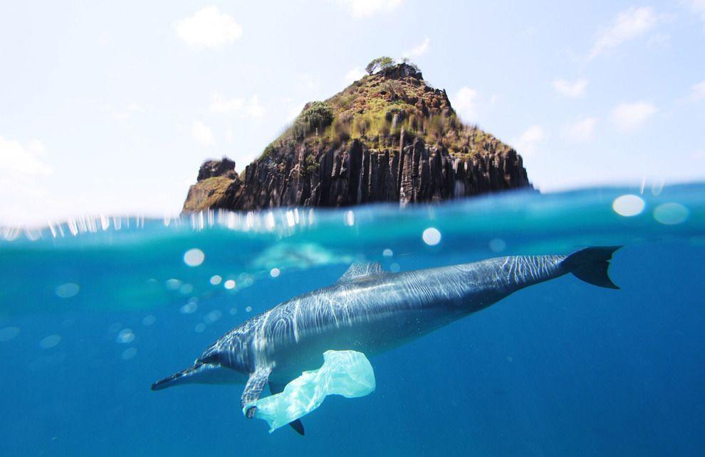 dolphin plastic bag