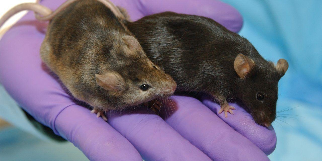 House Amendment Calls on EPA to Reduce Cruel and Needless Animal Testing