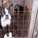 Why is the USDA Protecting the Identities of Puppy Mills?