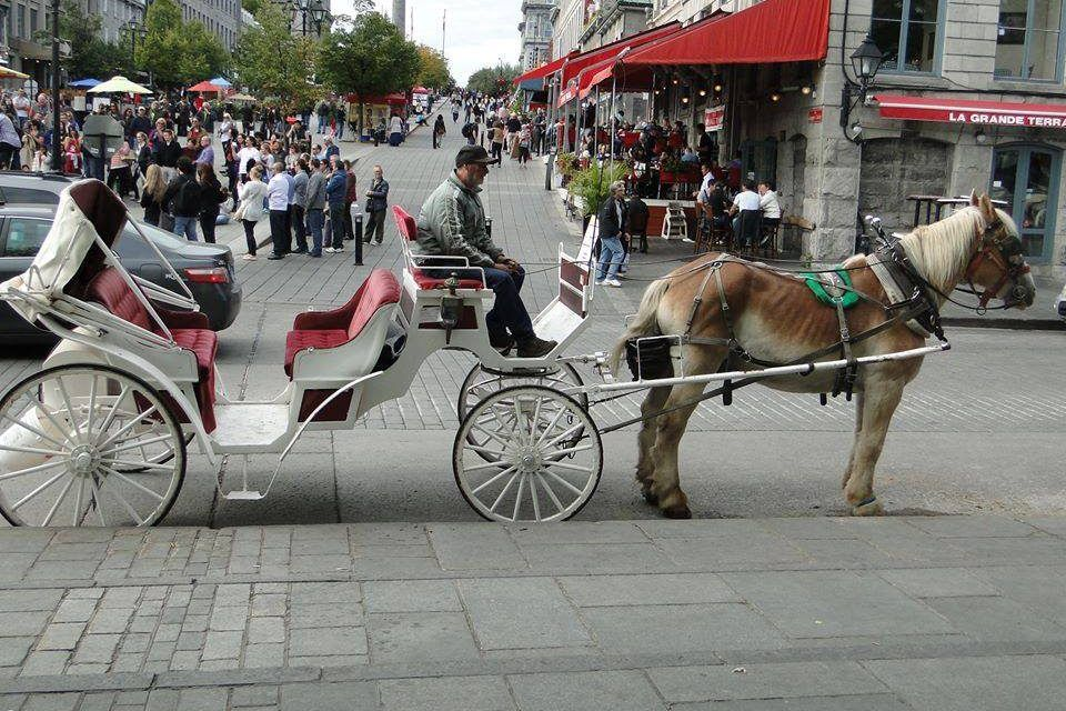 Good News! Montreal Moves to Ban Cruel Horse-Drawn Carriages