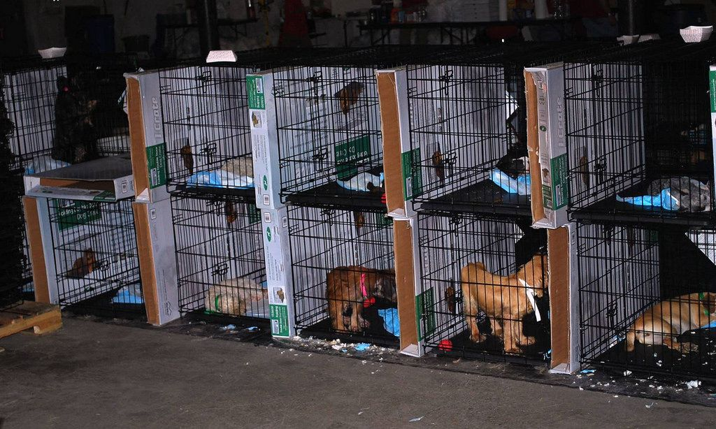 Ohio Takes New Steps to Stop Puppy Mill Cruelty