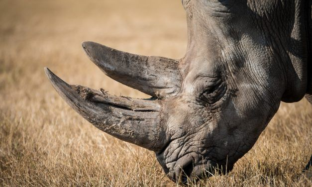 'Most Wanted' Poacher Arrested After Brutal Rhino Shooting