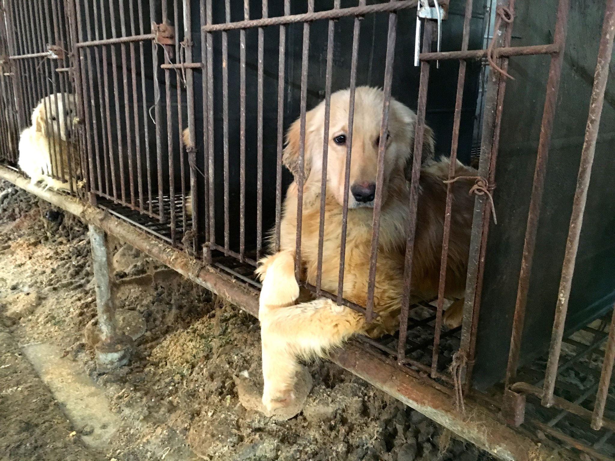 south korea dog meat