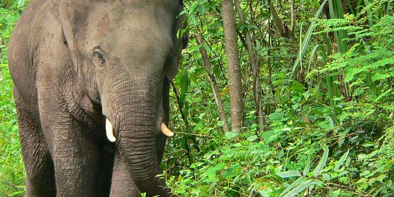 How Elephants Help Jungle Fruit Trees Survive