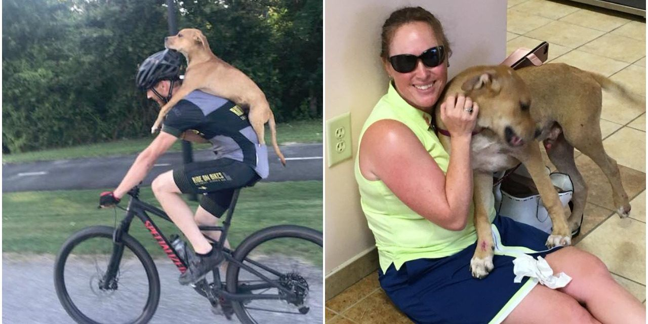 Cyclist Finds Puppy Hit by Car, Carries Him for Miles to Save His Life