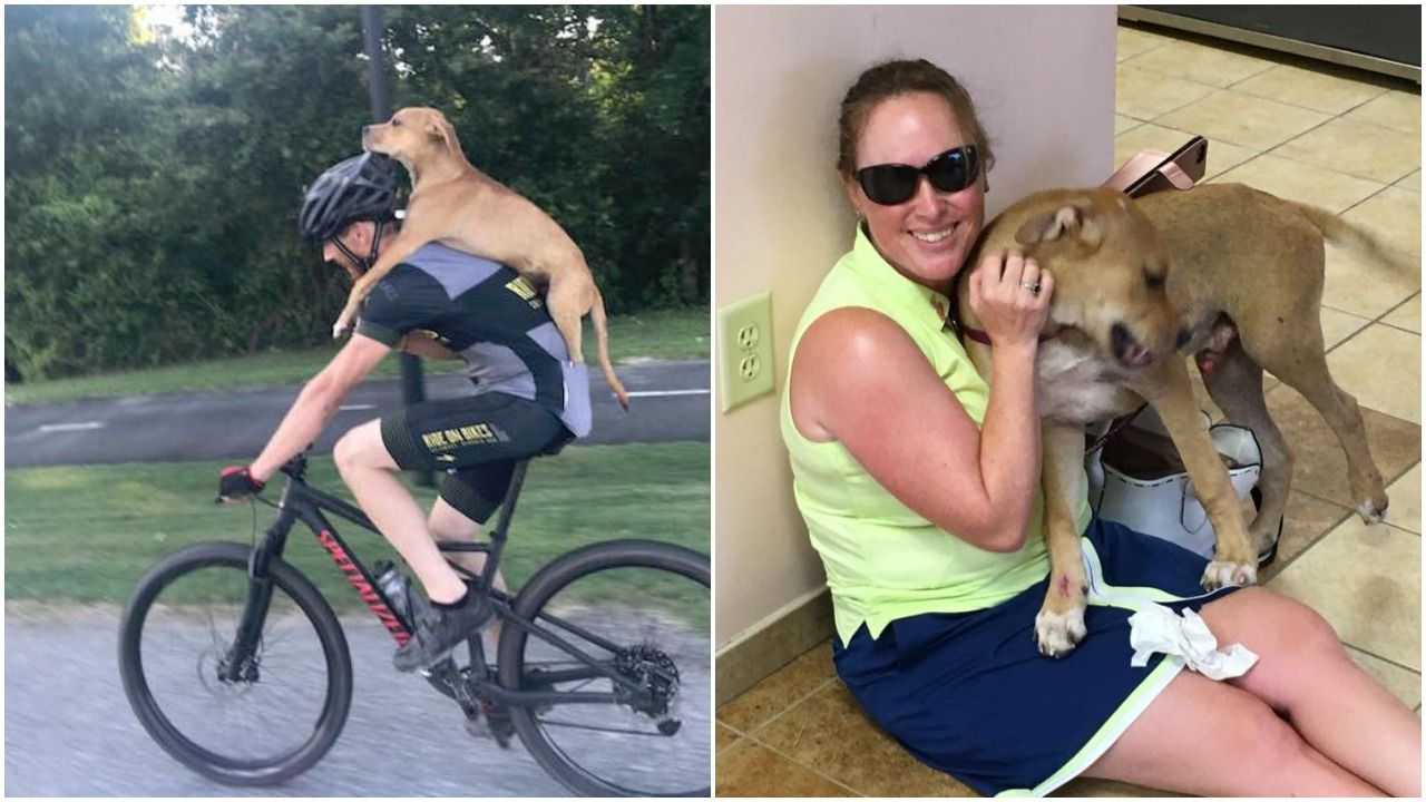 Injured dog rescued by cyclists