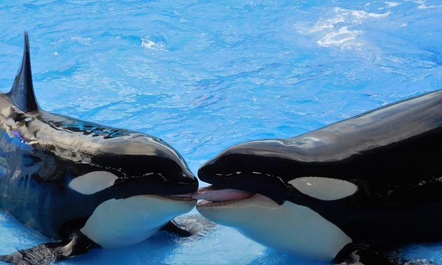 Thomas Cook to Stop Selling SeaWorld Tickets Due to Animal Cruelty
