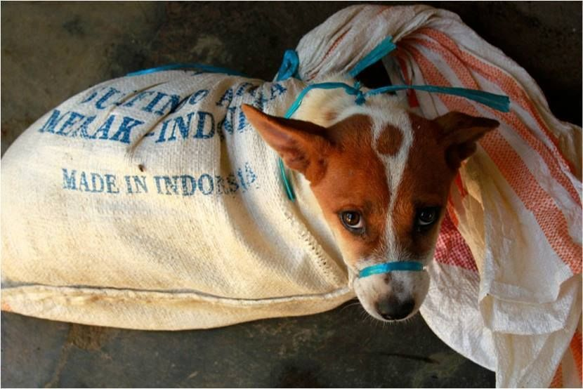 Indonesia's Government Pledges to Outlaw Dog Meat