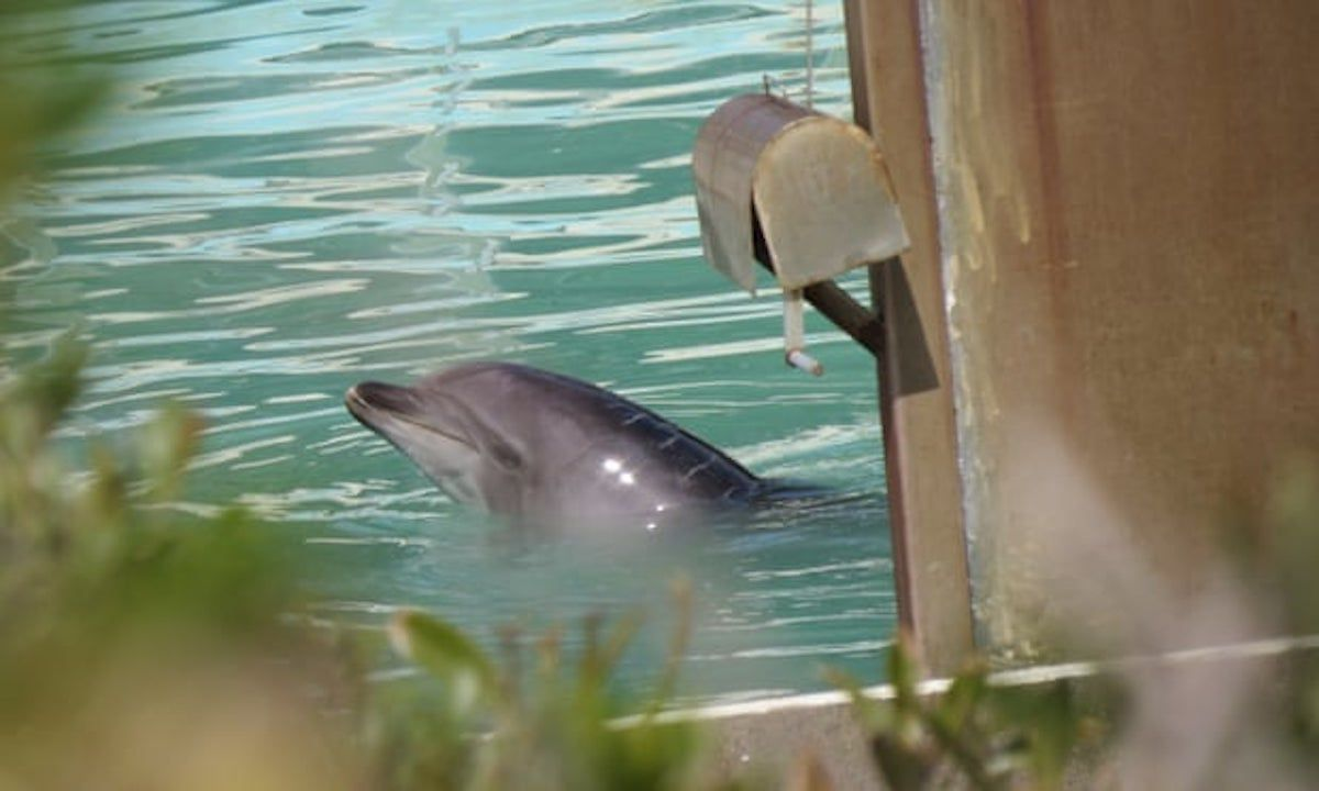 honey the lonely abandoned dolphin