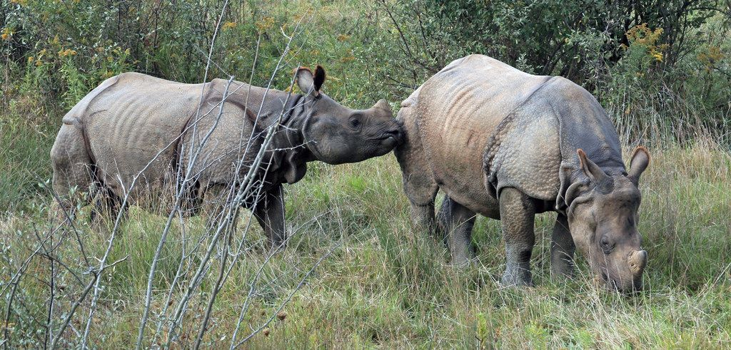 Rhino Poacher Mortgages His Own Son to Weapons Dealers