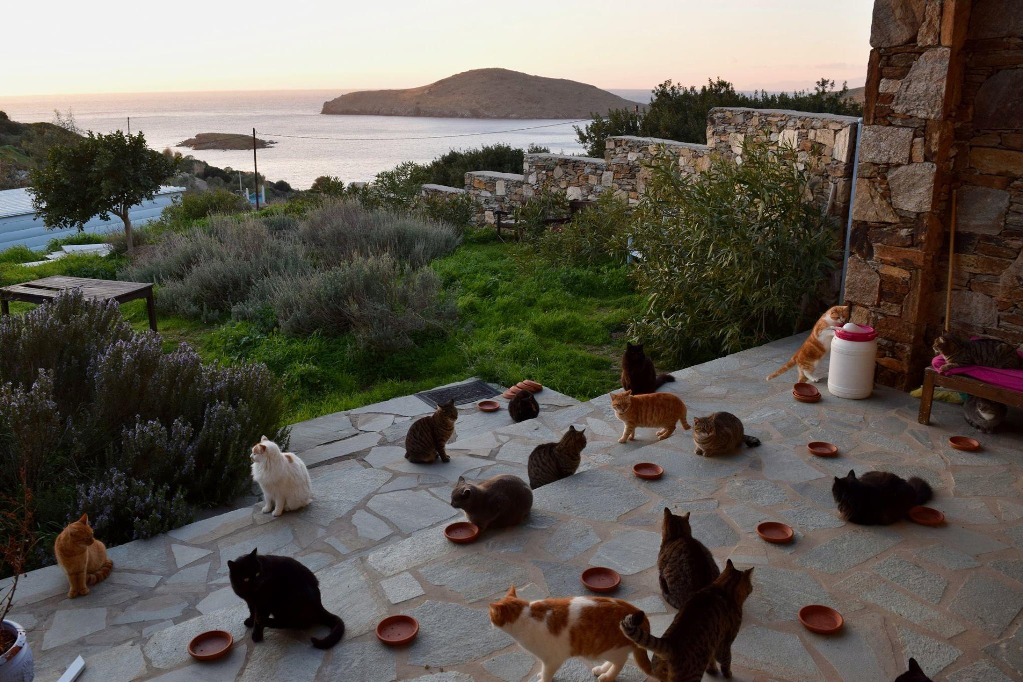 Cat lovers dream job on Greek island.