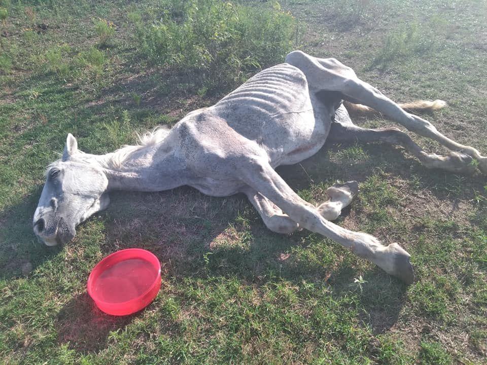 """Skeletal horse dies in rodeo """"rescue."""""""