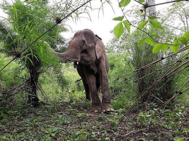 Vietnam Takes Giant Step Towards Elephant-Friendly Tourism