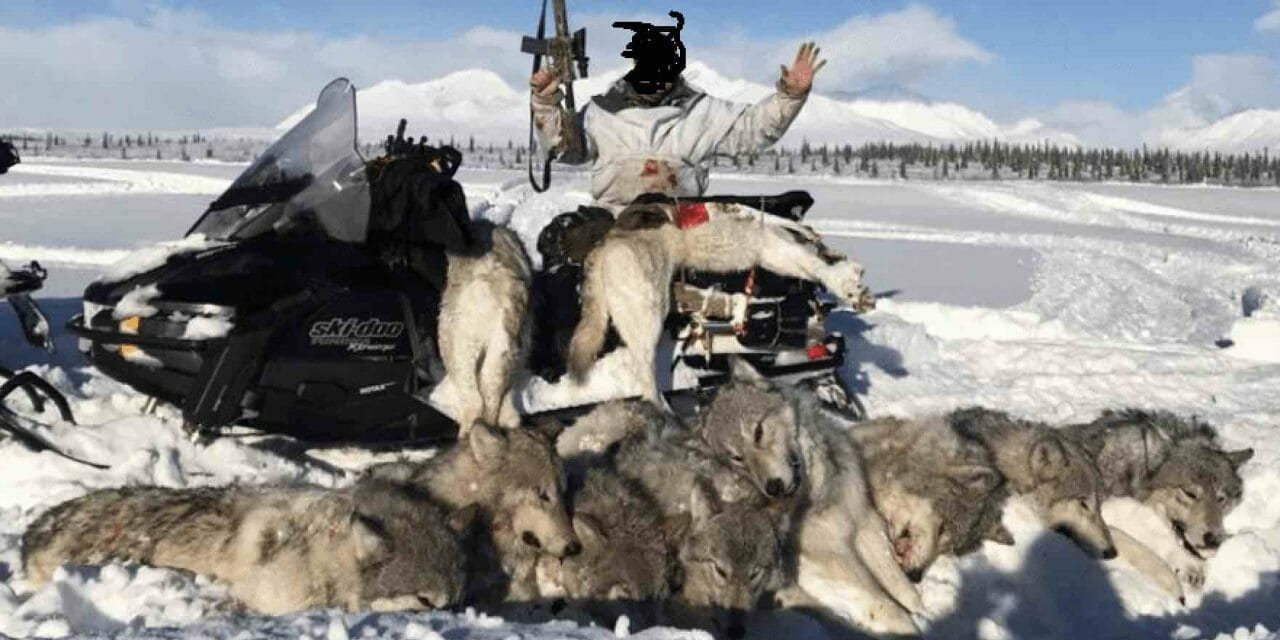 Guns and Wolves: How Hunting Culture Has Plundered America's Last Wild Frontier