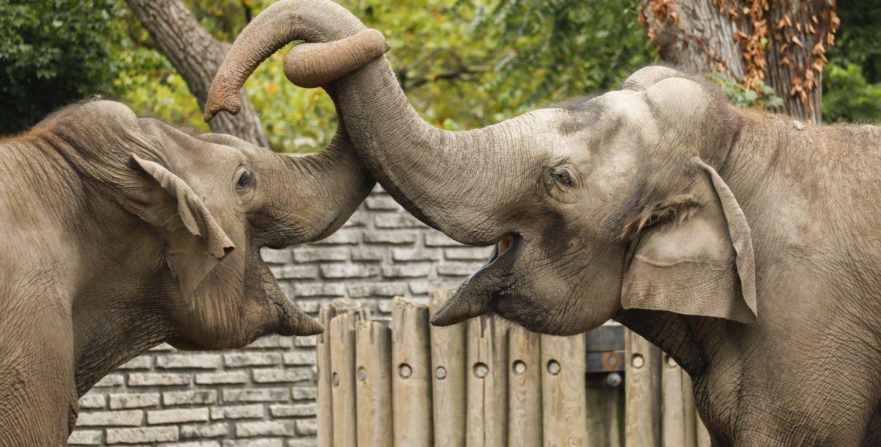 After Years of Cruelty, Buffalo Zoo Finally Shuts Down Miserable Elephant Exhibit