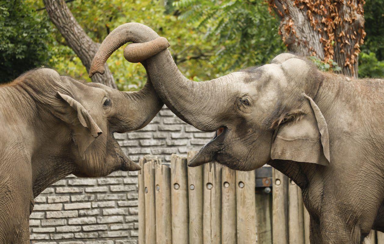 Buffalo Zoo elephants moving to New Orleans