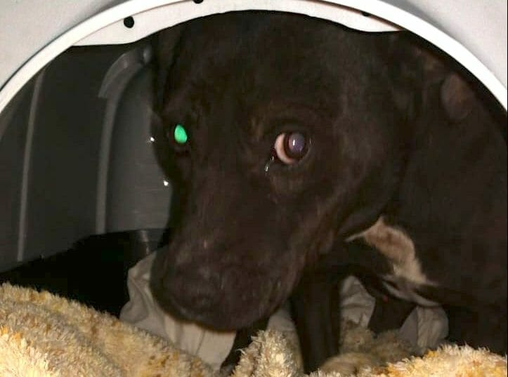 Sabinyo, dog saved by Lady Freethinker