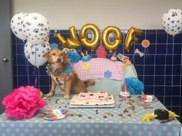 Dying, Formerly Chained Dog Gets 'Bucket List of A Lifetime'