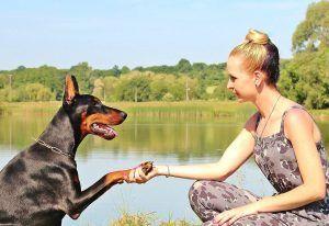 rottweiler dog shaking hands
