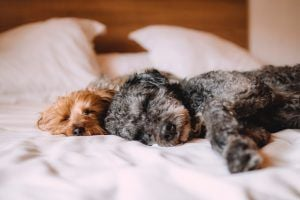 adorable dogs on bed