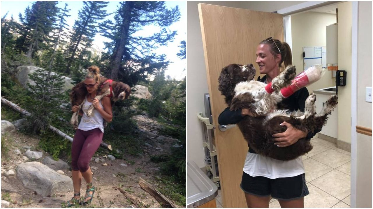 Hiker rescues lost dog