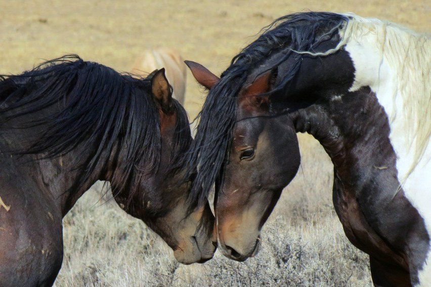 SIGN: Stop Barbaric Sterilization Experiments on America's Wild Horses