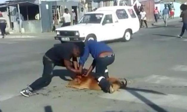 SIGN: Justice for Pit Bull Viciously Stabbed to Death in the Streets