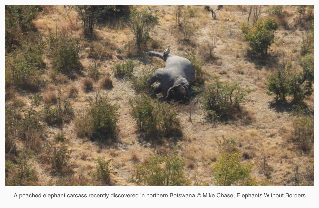 90 Elephant carcasses found in Botswana.