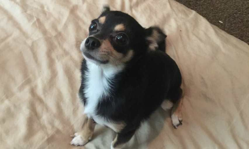 UPDATE: Attacker Who Threw Chihuahua from 7-Story Ledge Sentenced to Prison