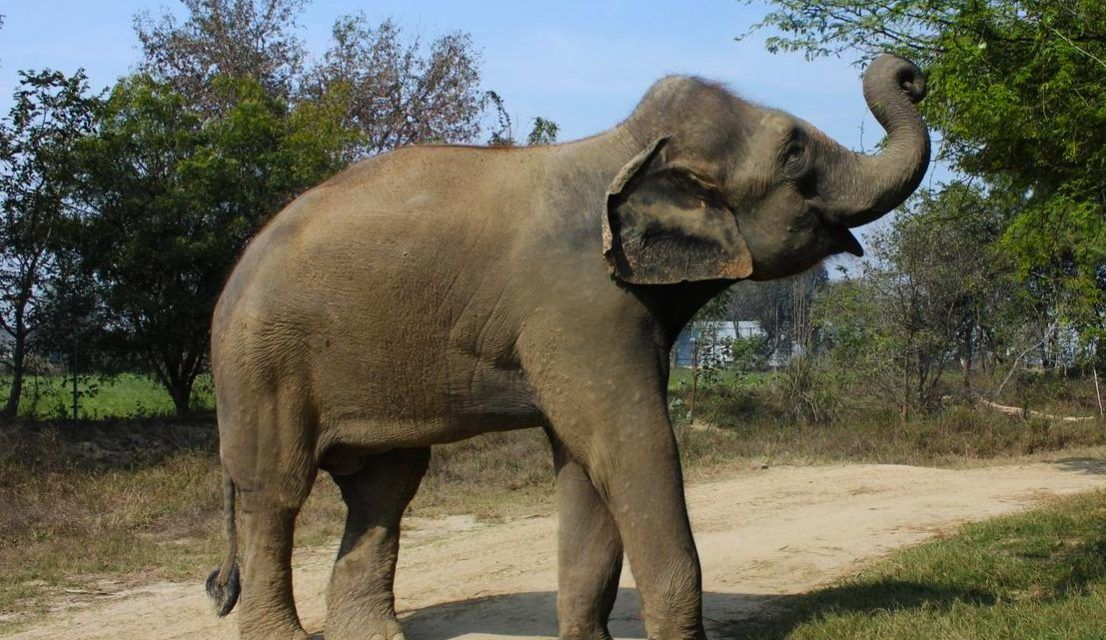 Truly Amazing Before & After Photos Of Rescued Elephants